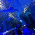 Residential Senior Care Outing to Sea Life Aquarium Mall of America